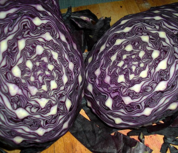 Take a look at that gorgeous red cabbage!